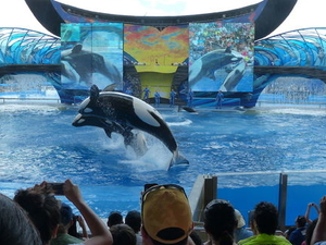 SeaWorld® Orlando Ticket  Photos
