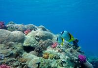 Sinbad Submarine Under The Red Sea Photos