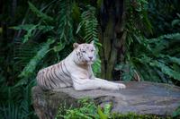Singapore Zoo, Night Safari or River Safari Admission Ticket with Round-Trip Transfer Photos