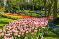 Skip the Line: Keukenhof Gardens Tour and Tulip Farm Visit from Amsterdam Photos