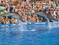 Skip the Line: Mallorca Marineland Tour
