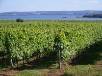 Small-Group Annapolis Valley Wine and Food Tour from Halifax Photos