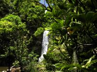 Small-Group Luxury Day Trip to Haleakala National Park and Hana Coast Rainforest Photos