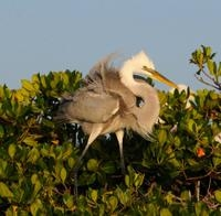 Small-Group Wildlife Boat Tour in Florida Everglades National Park Photos