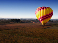 Sonoma Valley Hot Air Balloon Ride with Gourmet Champagne Brunch Photos
