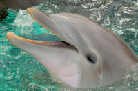 St Augustine and Dolphin Experience Day Trip from Orlando  Photos