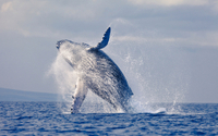 Stradbroke Island and Whale Watching Cruise Including BBQ Lunch Photos
