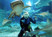 Sunshine Coast UnderWater World Entrance Ticket with Shark Dive Xtreme Photos