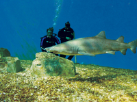 Tampa Shore Excursion: Dive with the Sharks at the Florida Aquarium Photos