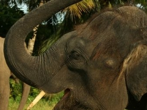One-Hour Elephant Jungle Trek from Phuket