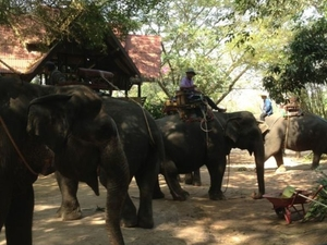 Elephant Ride and Jungle Trek Half-Day Tour from Pattaya Photos