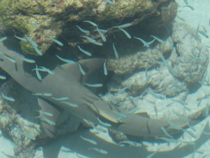 St Thomas Shore Excursion: Swimming with Sharks at Coral World Ocean Park Photos