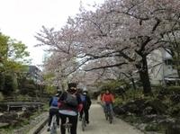 Tokyo by Bike: Skytree, Kiyosumi Garden and Sumo Stadium Photos