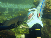 Underwater Helmet-Diving Experience at the Miami Seaquarium Photos