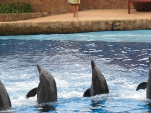 Ushaka Marine World in Durban Photos