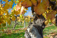 Victor Harbor with McLaren Vale Wine Region Tour from Adelaide Photos