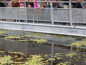 Swamp and Bayou Sightseeing Tour with Boat Ride from New Orleans Photos