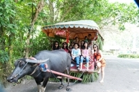 Villa Escudero Coconut Plantation Day Trip from Manila Photos