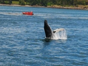 Friday Harbor Day Trip & Whale Watching from Seattle Photos