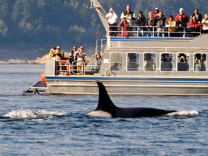 Victoria Shore Excursion: Whale-Watching Cruise with Expert Naturalist Guides Photos
