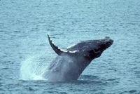 Whale Watching and Dolphin Spotting Cruise from the North Island Photos
