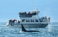 Whale-Watching Cruise with Expert Naturalists Photos