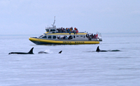Whale-Watching Cruise from Victoria and Butchart Gardens Admission Photos