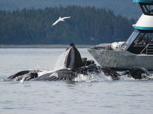 Juneau Shore Excursion: Mendenhall Glacier, Whale Watching and Salmon Bake Photos