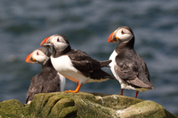 Wildlife Cruise from John O'Groats Photos
