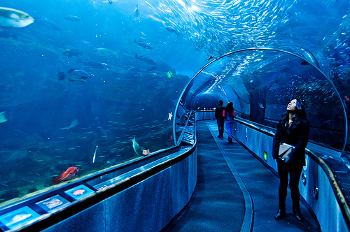 Aquarium Of The Bay San Francisco United States Tourist