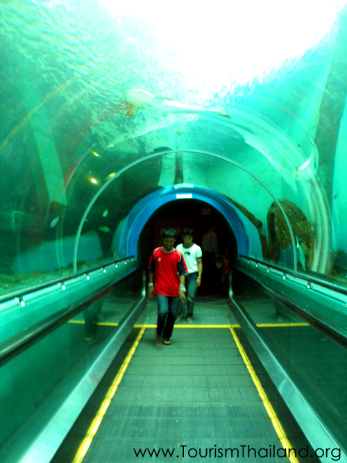 Rayong Aquarium, Thailand Tourist Information